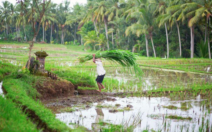 Bezienswaardigheden op Bali